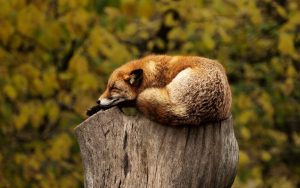 Schlaf ist Basis von Muskelaufbau